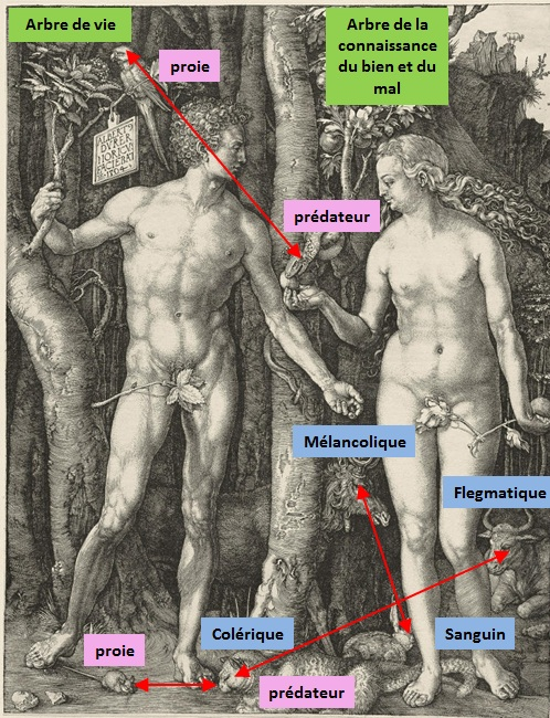 1504_Adam_Eve__Durer_Synthese