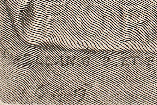 Mellan detail signature