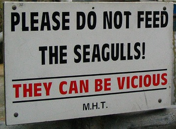 Seagulls warning