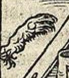 Vitruvius patte lievre