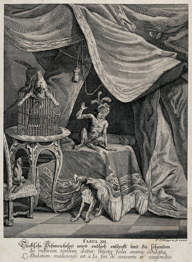1743 J E Ridinger T wo_dogs a cat and a monkey_Wellcome