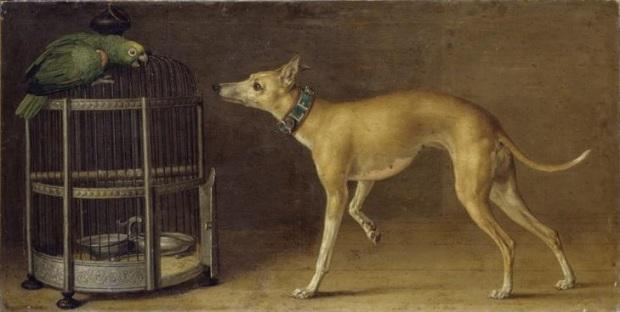 1750 ca Johann Dietrich Findorff Levrier et perroquet, Staatliches Museum, Kunstsammlungen, Schwerin, Allemagne