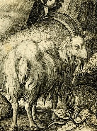 1620x_Haarlem_Cornelis_Van_The_Fall_Of_Man_bouc chevre