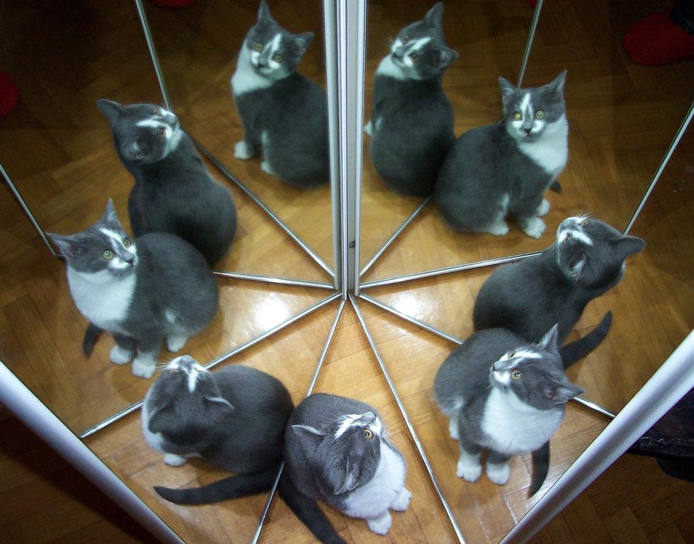 neuf chats