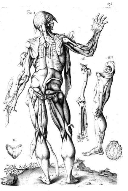 Andrea Laurentius' Historia Anatomica Humani Coporis, imprime a Francfort en 1600 1600 Planche p.251