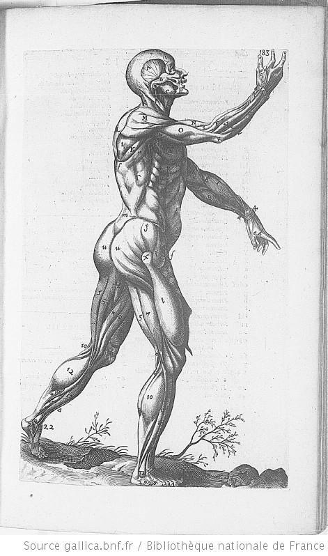 Andrea Laurentius' Historia Anatomica Humani Coporis, imprime a Francfort en 1600 Planche p.187