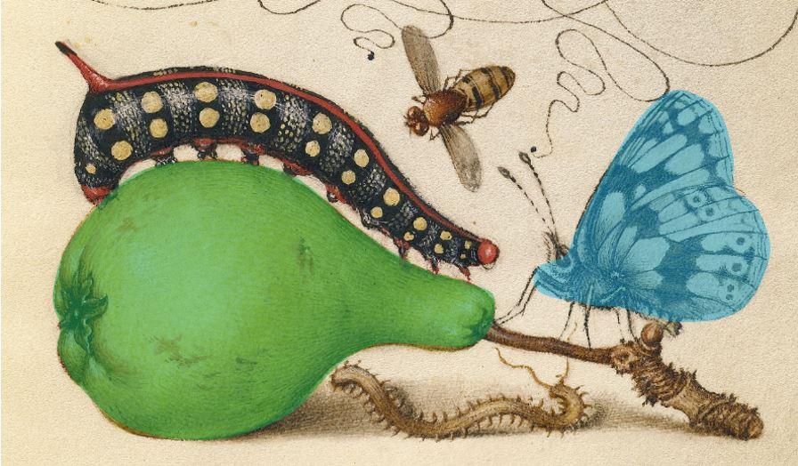 Joris Hoefnagel Model Book of Calligraphy. 1561 - 1562; illumination added 1591 - 1596 _Google_Art_Project detail
