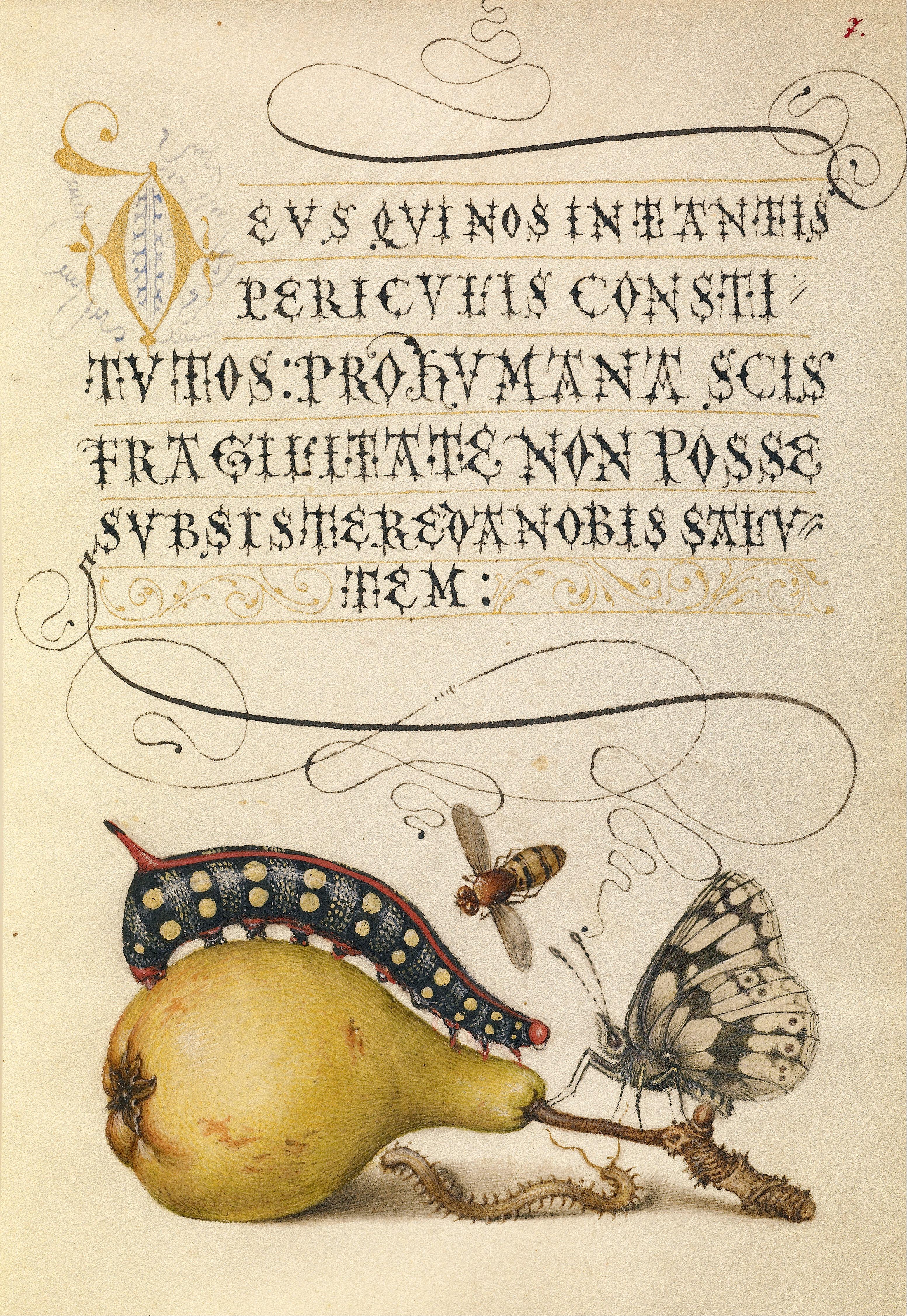 Joris Hoefnagel Model Book of Calligraphy. 1561 - 1562; illumination added 1591 - 1596 _Google_Art_Project