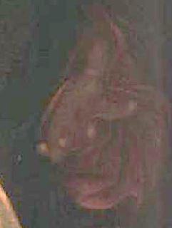 The_Calling_of_Saint_Matthew-Caravaggio_1599-1600_main Jesus
