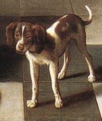 Hoogstraten_corridor_chien