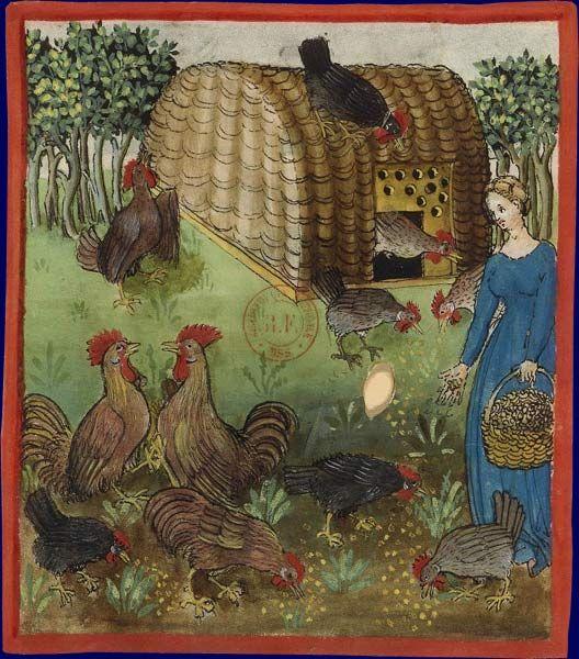 Femme donnant a manger a ses poules Ibn Butlan, Tacuinum sanitatis Rhenanie, 3e quart du XVe siecle Paris, BNF, departement des Manuscrits, Latin 9333, fol. 63
