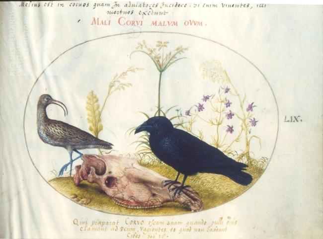 Joris Hoefnagel, Rosenwald, album De vier elementen, 1575- 82, NGA, Washington