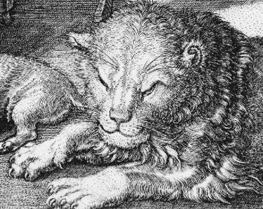 Durer 1514 Saint Jerome dans son etude tete lion