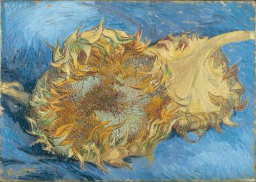Van Gogh 1888 Sunflowers gone to seed (F 375) MET