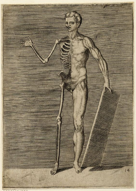 1560 ca Giulio Bonasone - Plate 14 from a series of 14 engravings of anatomical studies