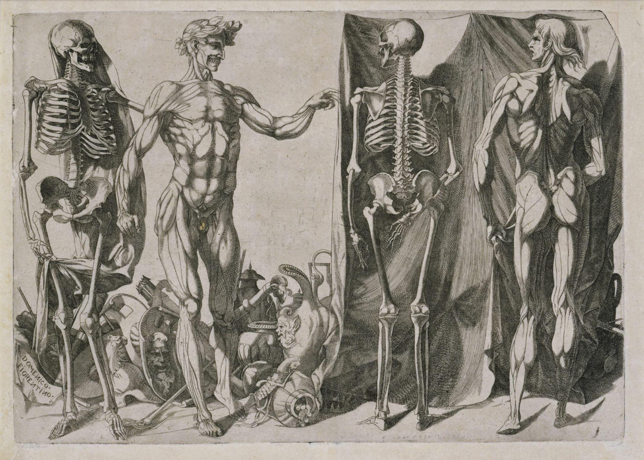 DOMENICO DEL BARBIERE Anatomical Study,1540-50,British Museum,London