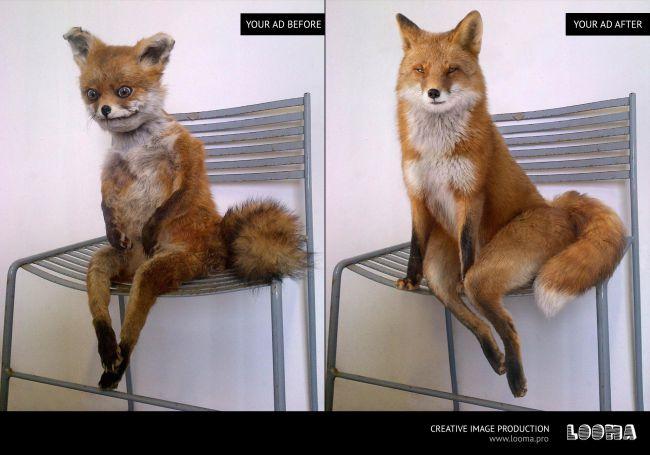 2017 agence Looma fox