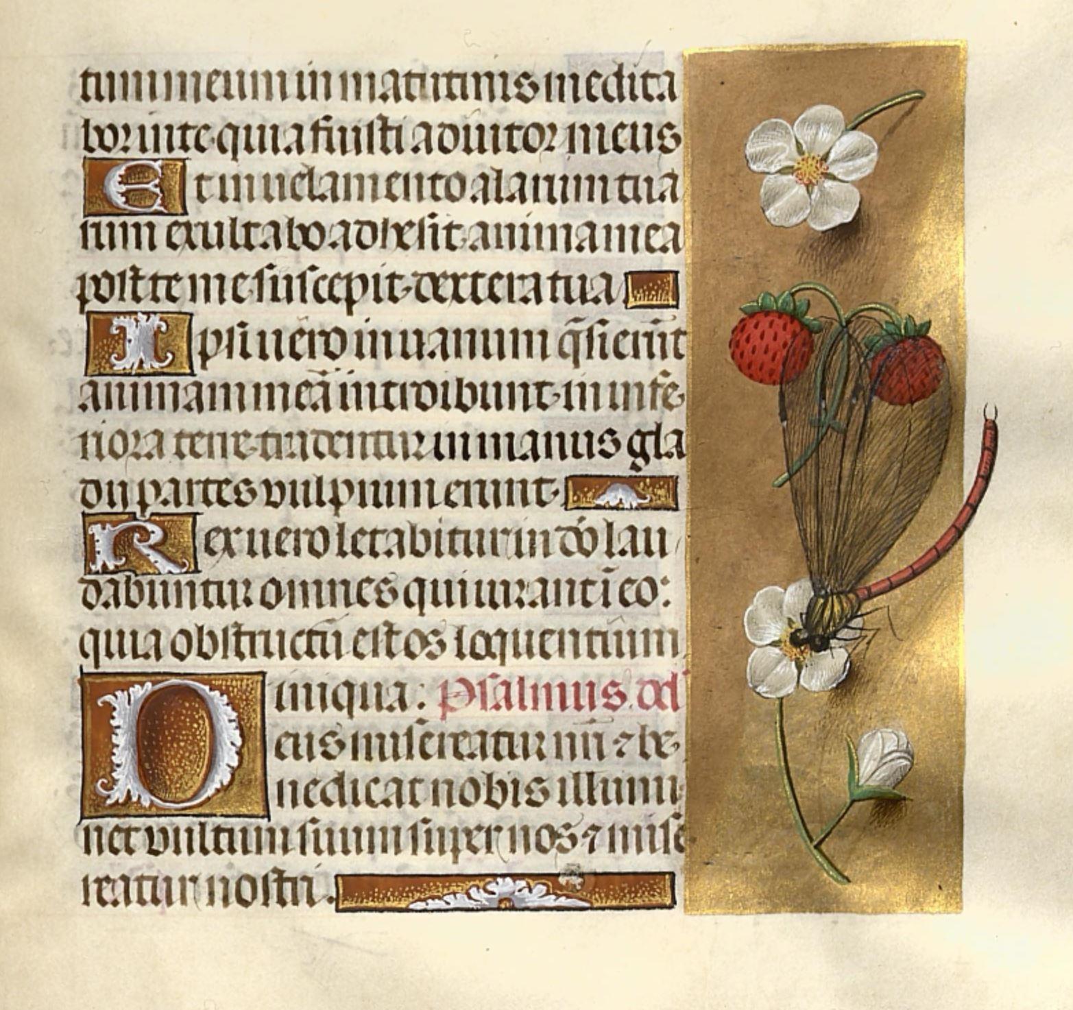 1483-98 Horae Beatae Mariae Virginis (La Flora, pour Charles VIII) Biblioteca nazionale Napoli Ms. I. B. 51 fol 224